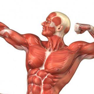 trainen spieren